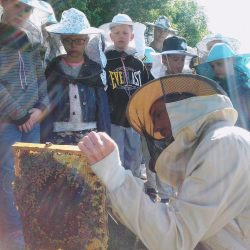 Warsztaty pszczelarskie dla szkół