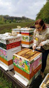 Gniazdo pszczelej rodziny