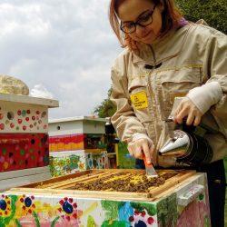 Czyścimy ramki z mostów woskowych, aby nie zgnieść pszczół przy zamykaniu ula