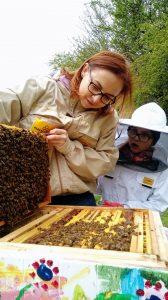 Piękna ramka pszczela z czerwiem (larwami)