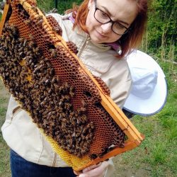 Dokładnie przyglądamy się ramkom oceniając siłę matki pszczelej
