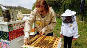 Delikatnie wyjmujemy ramki, aby nie zgniatać pszczół