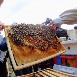 Ramka pszczela wczesną wiosną