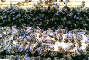 Rozpoczynamy zimowlę pszczół