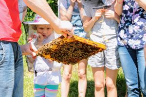 Pokazujemy ramki, na których obecnie pracują pszczelarze