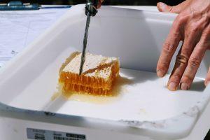 W miarę możliwości umożliwiamy degustację świeżego miodu