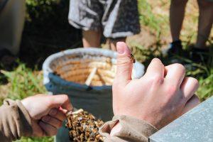 Zasiedlanie kószki pszczołami