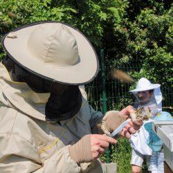 Przygotowujemy matkę pszczelą do uwolnienia