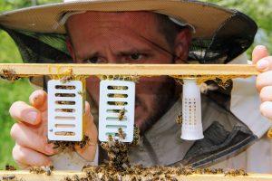 Nowe matki pszczele
