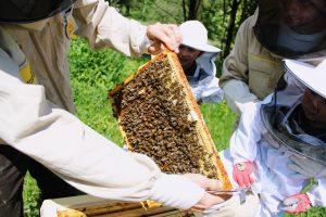 Warsztaty pszczelarskie - ramka pszczela
