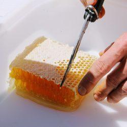 Miód sekcyjny - plaster woskowy z miodem