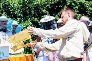 Zmiatamy pszczoły z ramek