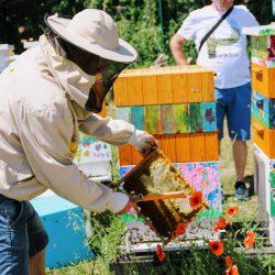 Pszczoły wracają do ula, a ramki trafiają do transportówki