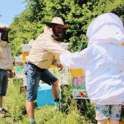 Dzieci pomagają przy pobieraniu miodu