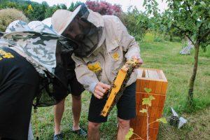 Przekazujemy wiedzę pszczelarską młodzieży