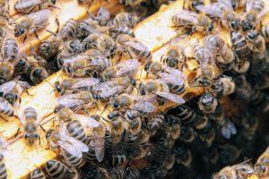 Nasze pszczoły