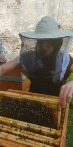 Kurs pszczlarski w Katowicach